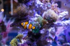 Pescados y corales Fotografía de archivo