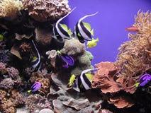 Pescados y corales del filón Imagen de archivo libre de regalías