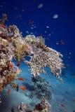 Pescados y corales en aguas tropicales Fotos de archivo
