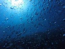 Pescados y danza de burbujas Imágenes de archivo libres de regalías