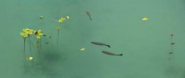 Pescados y loto Foto de archivo libre de regalías