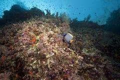Pescados y océano foto de archivo libre de regalías