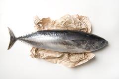 Pescados y papel de atún fotos de archivo