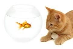 Pescados y ratón del gato Fotografía de archivo