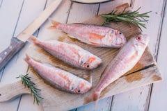 Pescados y romero del salmonete Fotos de archivo libres de regalías