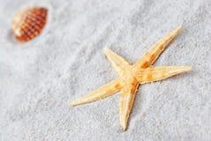 Pescados y shell de la estrella en la arena Imágenes de archivo libres de regalías