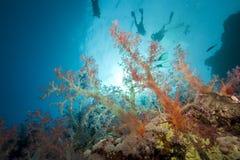 Pescados, zambullidores y océano Fotografía de archivo
