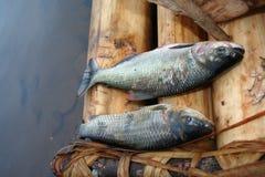 Pescando in Bolivia Fotografia Stock Libera da Diritti