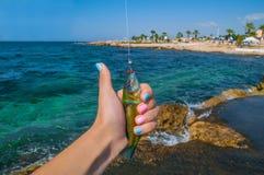 Pescando come fotografie stock