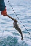 Pescando con il palangaro fotografia stock