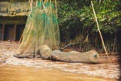 Pescando con una rete a sacco durante la bassa marea nel Vietnam, delta del Mekong fotografie stock