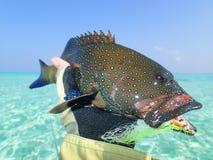 Pescando in Maldive Fotografia Stock