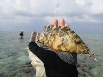 Pescando in Maldive Immagine Stock