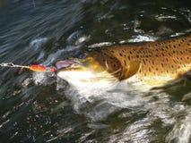Pescando in Mongolia Immagine Stock