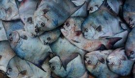 Pescando nell'Oceano Atlantico immagini stock
