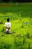 Pescando nello stagno Fotografie Stock Libere da Diritti