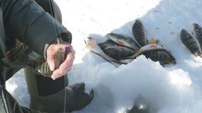 Pescando o esporte de inverno baixo do inverno, passatempo do inverno filme