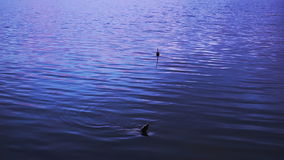 Pescando o flutuador no lago vídeos de arquivo