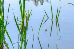 Pescando o flutuador nos juncos fotografia de stock royalty free