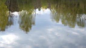 Pescando o flutuador situado na superfície da água video estoque