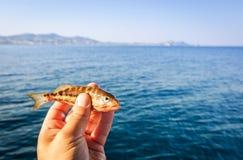 Pescando peixes pequenos no Rodes Imagens de Stock