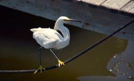 Pescando per il mio pranzo Fotografia Stock