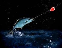 Pescare un grande pesce alla notte Immagini Stock Libere da Diritti