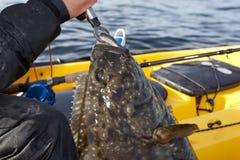 Pescatore che sbarca un grande pesce di mare fotografia stock