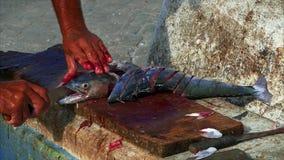 Pescatore che taglia pesce sul porticciolo archivi video