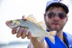 Pescatore con il pesce d'acqua dolce fresco del tamburo immagini stock