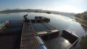 Pescatore del lago che trasporta pesce dalla gabbia del pesce stock footage