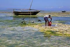 Pescatore e barche, Nungwi, Zanzibar, Tanzania Immagine Stock