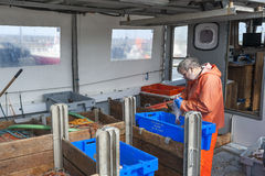 Pescatore sul lavoro Fotografie Stock Libere da Diritti