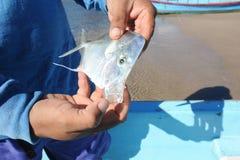 Pescatore sulla spiaggia di Los Cobanos Fotografia Stock Libera da Diritti
