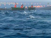 Pescatori in barche verdi nel almadraba fotografie stock libere da diritti
