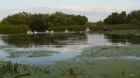 Pescatori che controllano le reti all'alba nel delta di Danubio video d archivio