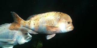 Pesce fotografie stock libere da diritti