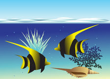 Pesce. Immagine Stock Libera da Diritti