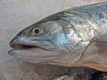 Pesce Fotografie Stock
