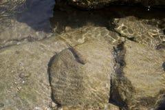 Pesce Immagine Stock Libera da Diritti