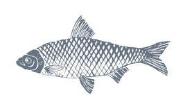 Pesce 2 Immagini Stock