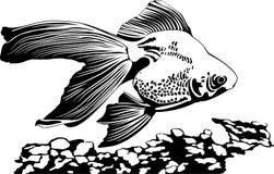 Pesce Immagini Stock