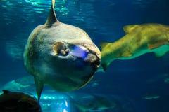 Pesce - acquario Barcellona immagini stock