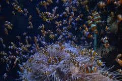 Pesce in acquario in Francia Immagini Stock