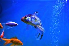 Pesce acquatico fotografie stock libere da diritti
