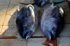 Pesce al mercato Fotografia Stock