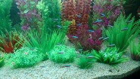 Pesce al neon Immagini Stock
