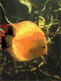 Pesce arancio di vettore sotto acqua royalty illustrazione gratis