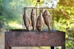 Pesce arrostito con le spezie su fuoco Peschi il barbecue nel giardino all'aperto, un giorno soleggiato caldo fotografia stock libera da diritti
