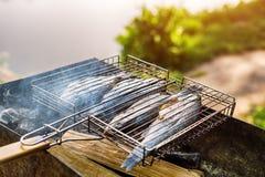 Pesce arrostito con le spezie su fuoco Peschi il barbecue nel giardino all'aperto, un giorno soleggiato caldo immagini stock libere da diritti